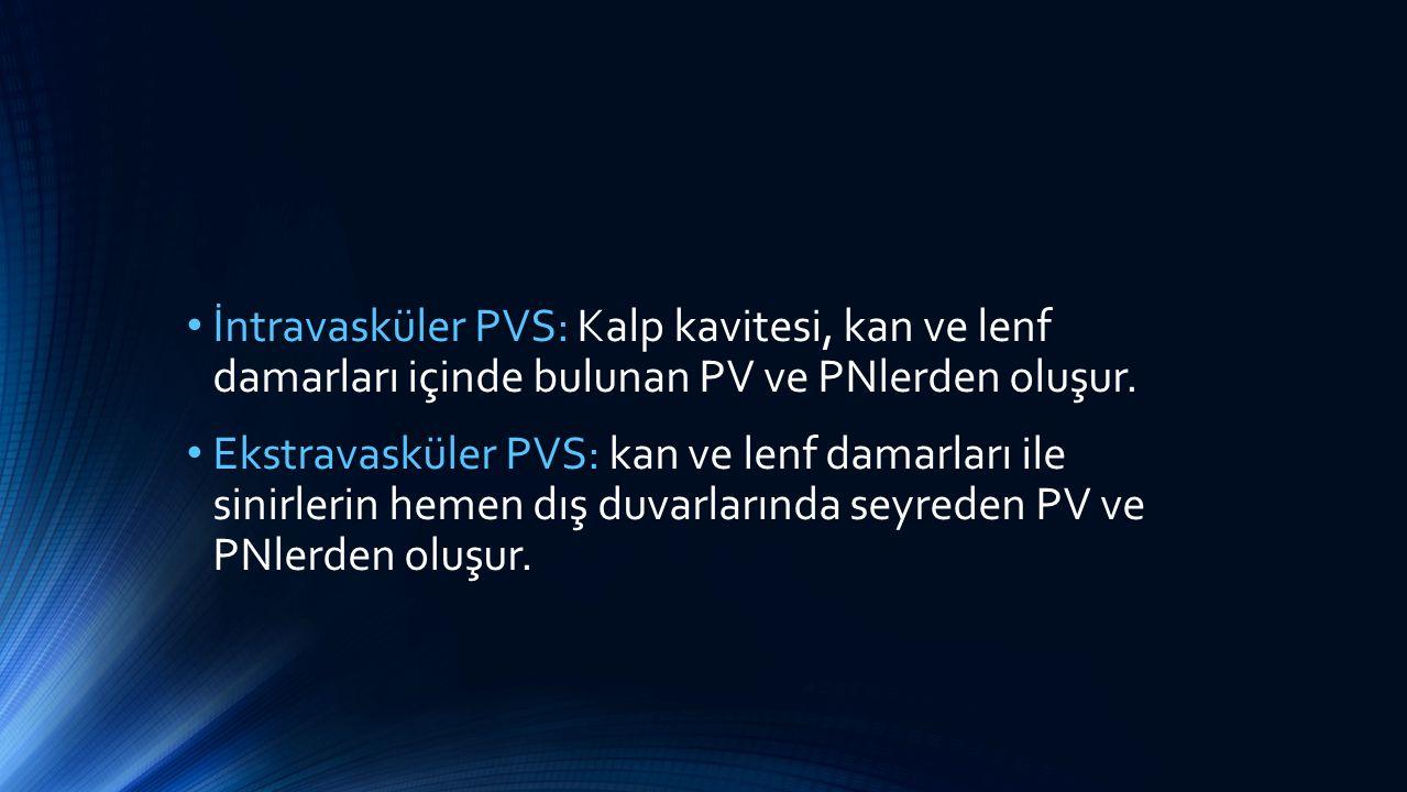İntravasküler PVS: Kalp kavitesi, kan ve lenf damarları içinde bulunan PV ve PNlerden oluşur. Ekstravasküler PVS: kan ve lenf damarları ile sinirlerin