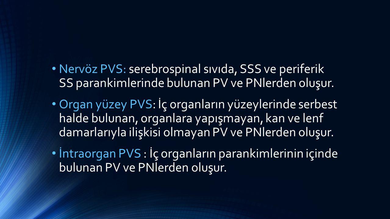 Nervöz PVS: serebrospinal sıvıda, SSS ve periferik SS parankimlerinde bulunan PV ve PNlerden oluşur. Organ yüzey PVS: İç organların yüzeylerinde serbe