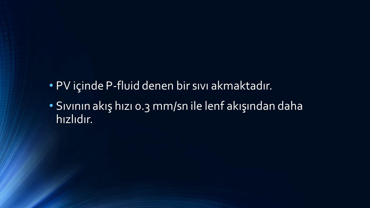 PV içinde P-fluid denen bir sıvı akmaktadır. Sıvının akış hızı 0.3 mm/sn ile lenf akışından daha hızlıdır.