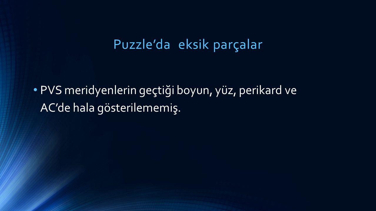 Puzzle'da eksik parçalar PVS meridyenlerin geçtiği boyun, yüz, perikard ve AC'de hala gösterilememiş.