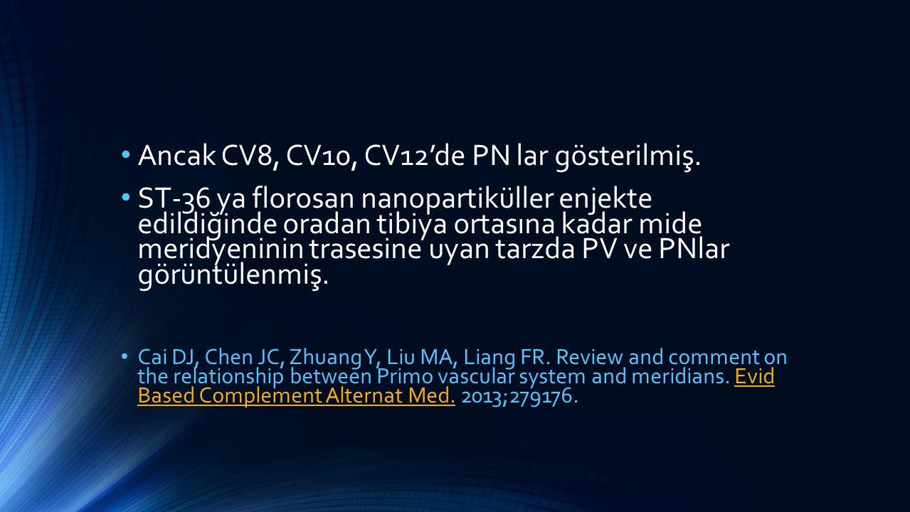 Ancak CV8, CV10, CV12'de PN lar gösterilmiş. ST-36 ya florosan nanopartiküller enjekte edildiğinde oradan tibiya ortasına kadar mide meridyeninin tras