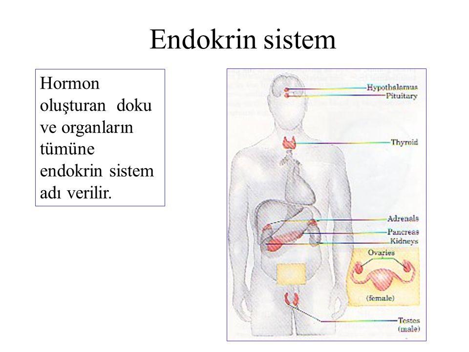 Endokrin sistem Hormon oluşturan doku ve organların tümüne endokrin sistem adı verilir.