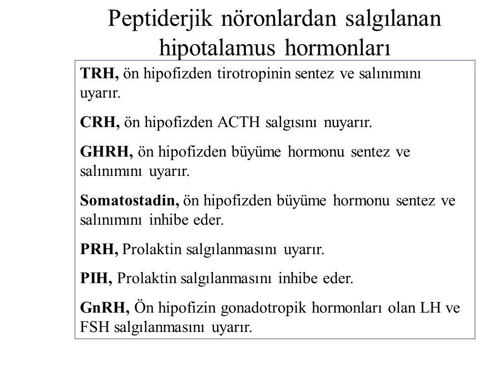 Peptiderjik nöronlardan salgılanan hipotalamus hormonları TRH, ön hipofizden tirotropinin sentez ve salınımını uyarır. CRH, ön hipofizden ACTH salgısı
