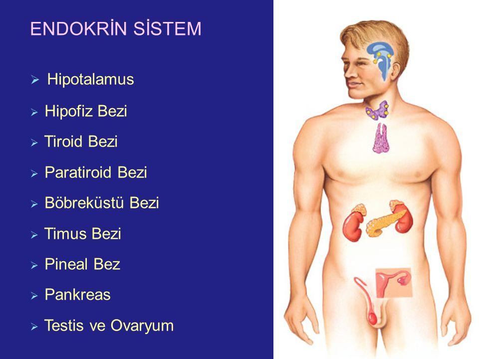 ENDOKRİN SİSTEM  Hipotalamus  Hipofiz Bezi  Tiroid Bezi  Paratiroid Bezi  Böbreküstü Bezi  Timus Bezi  Pineal Bez  Pankreas  Testis ve Ovaryu