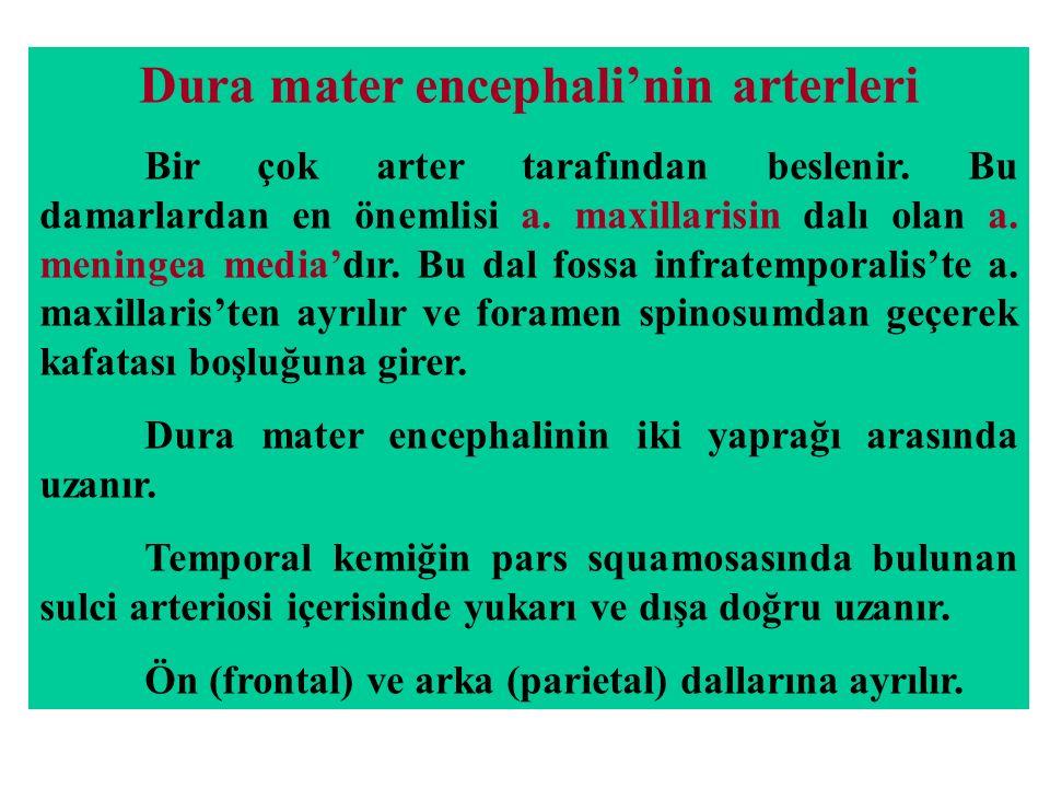 Dura mater encephali'nin arterleri Bir çok arter tarafından beslenir.