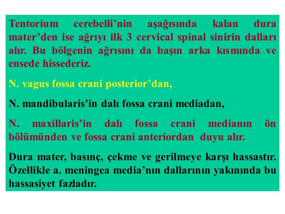 Tentorium cerebelli'nin aşağısında kalan dura mater'den ise ağrıyı ilk 3 cervical spinal sinirin dalları alır. Bu bölgenin ağrısını da başın arka kısm