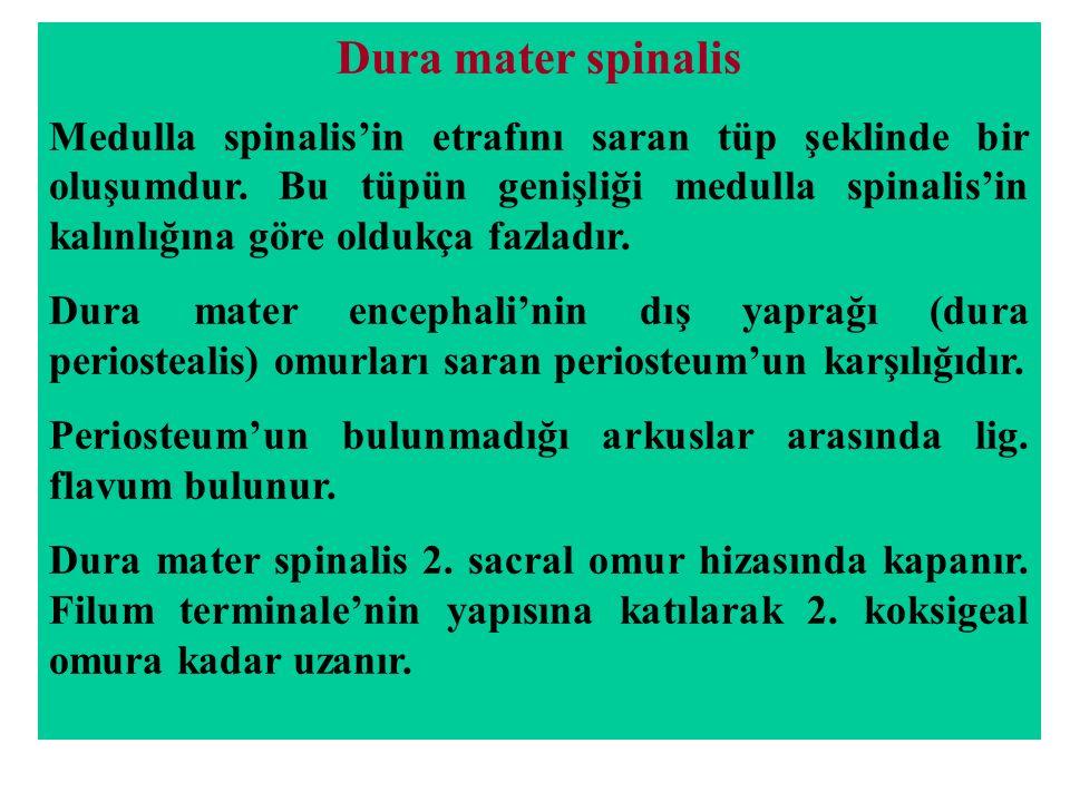 Dura mater spinalis Medulla spinalis'in etrafını saran tüp şeklinde bir oluşumdur. Bu tüpün genişliği medulla spinalis'in kalınlığına göre oldukça faz