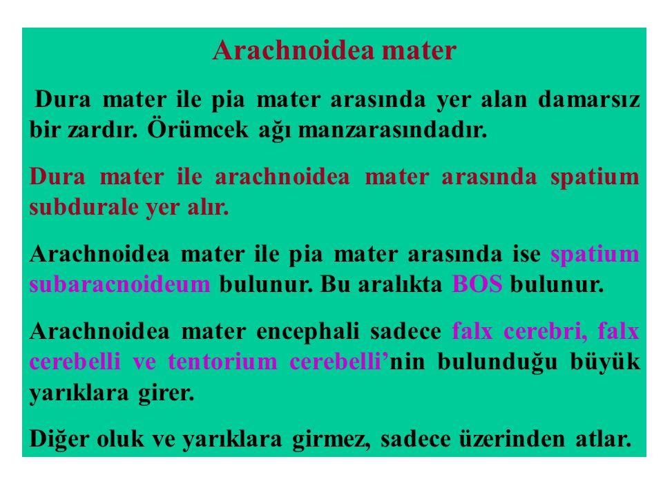 Arachnoidea mater Dura mater ile pia mater arasında yer alan damarsız bir zardır.