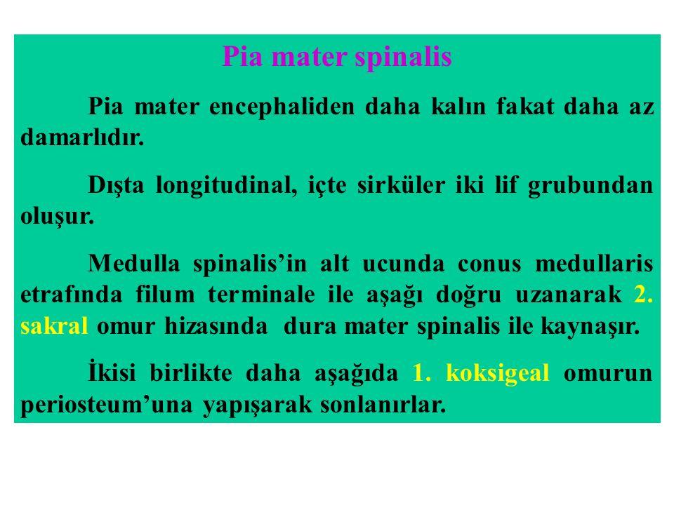 Pia mater spinalis Pia mater encephaliden daha kalın fakat daha az damarlıdır. Dışta longitudinal, içte sirküler iki lif grubundan oluşur. Medulla spi