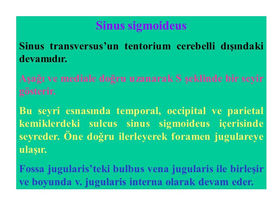 Sinus sigmoideus Sinus transversus'un tentorium cerebelli dışındaki devamıdır. Aşağı ve mediale doğru uzanarak S şeklinde bir seyir gösterir. Bu seyri