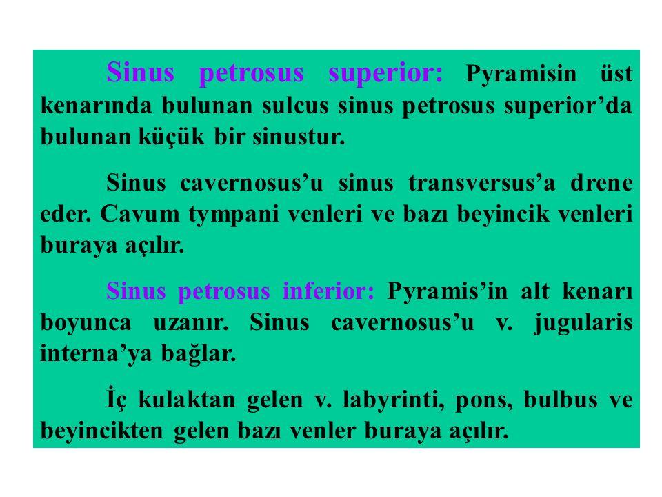 Sinus petrosus superior: Pyramisin üst kenarında bulunan sulcus sinus petrosus superior'da bulunan küçük bir sinustur. Sinus cavernosus'u sinus transv