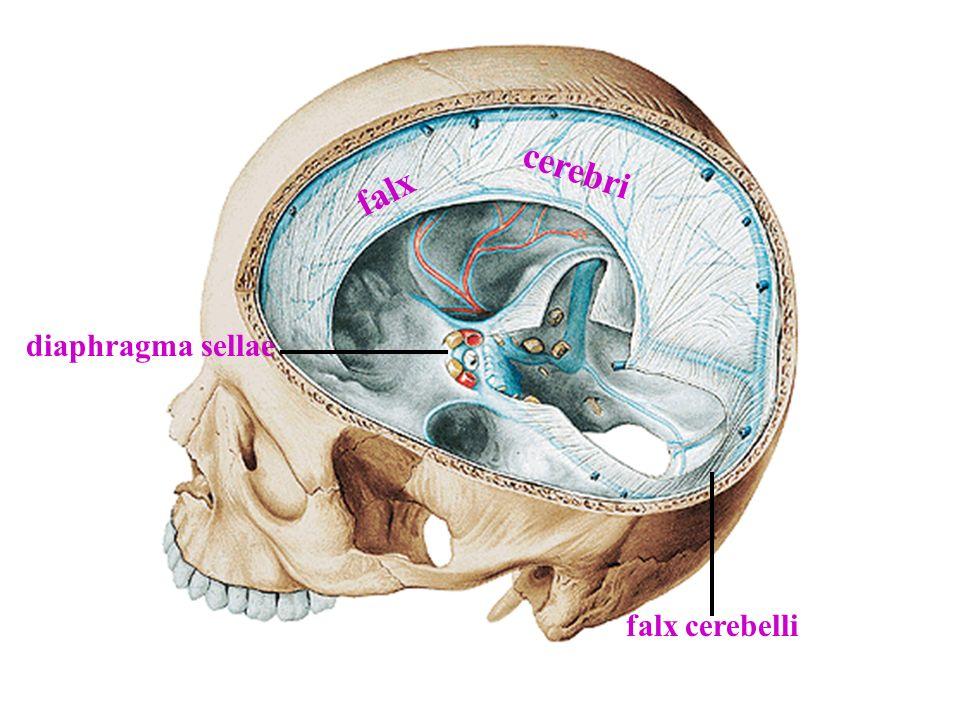 Cisterna cerebellomedullaris (Magna) Cisterna fossae lateralis cerebri Cisterna chiasmatica Cisterna interpedincularis (Cisterna basalis) Cisterna pontocerebellaris Cisterna ambiens Cisterna pericallosa