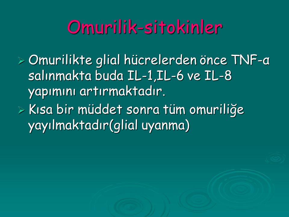 Omurilik-sitokinler  Omurilikte glial hücrelerden önce TNF-α salınmakta buda IL-1,IL-6 ve IL-8 yapımını artırmaktadır.