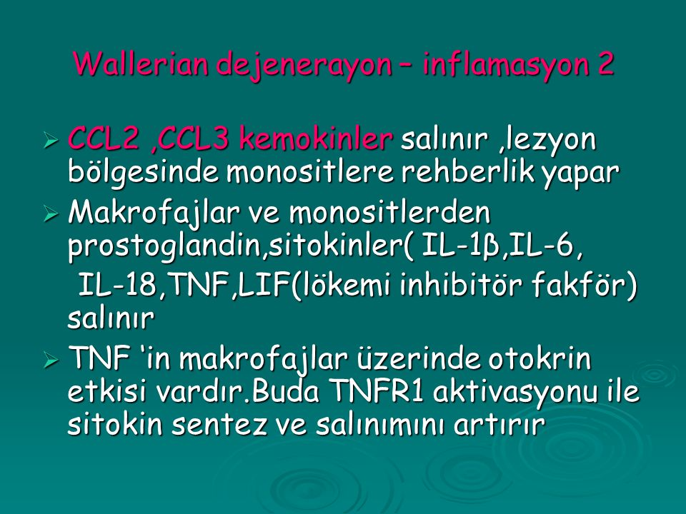 Wallerian dejenerayon – inflamasyon 2  CCL2,CCL3 kemokinler salınır,lezyon bölgesinde monositlere rehberlik yapar  Makrofajlar ve monositlerden prostoglandin,sitokinler( IL-1β,IL-6, IL-18,TNF,LIF(lökemi inhibitör fakför) salınır IL-18,TNF,LIF(lökemi inhibitör fakför) salınır  TNF 'in makrofajlar üzerinde otokrin etkisi vardır.Buda TNFR1 aktivasyonu ile sitokin sentez ve salınımını artırır