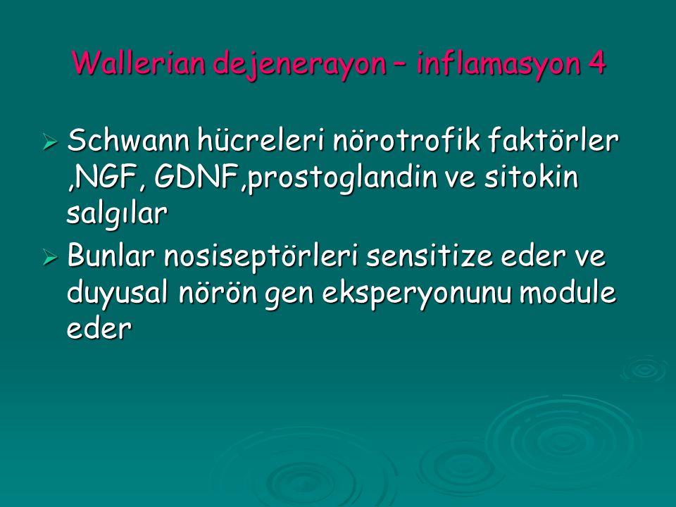 Wallerian dejenerayon – inflamasyon 4  Schwann hücreleri nörotrofik faktörler,NGF, GDNF,prostoglandin ve sitokin salgılar  Bunlar nosiseptörleri sensitize eder ve duyusal nörön gen eksperyonunu module eder