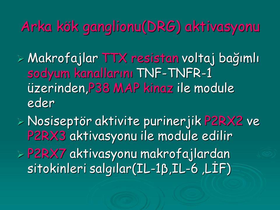 Arka kök ganglionu(DRG) aktivasyonu  Makrofajlar TTX resistan voltaj bağımlı sodyum kanallarını TNF-TNFR-1 üzerinden,P38 MAP kinaz ile module eder  Nosiseptör aktivite purinerjik P2RX2 ve P2RX3 aktivasyonu ile module edilir  P2RX7 aktivasyonu makrofajlardan sitokinleri salgılar(IL-1β,IL-6,LİF)