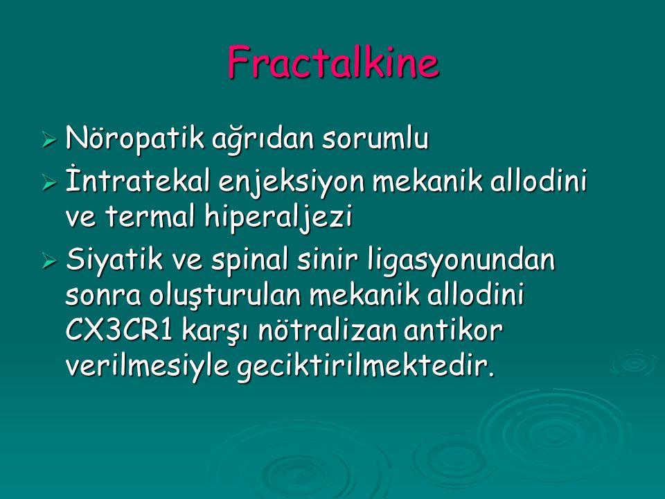 Fractalkine  Nöropatik ağrıdan sorumlu  İntratekal enjeksiyon mekanik allodini ve termal hiperaljezi  Siyatik ve spinal sinir ligasyonundan sonra oluşturulan mekanik allodini CX3CR1 karşı nötralizan antikor verilmesiyle geciktirilmektedir.