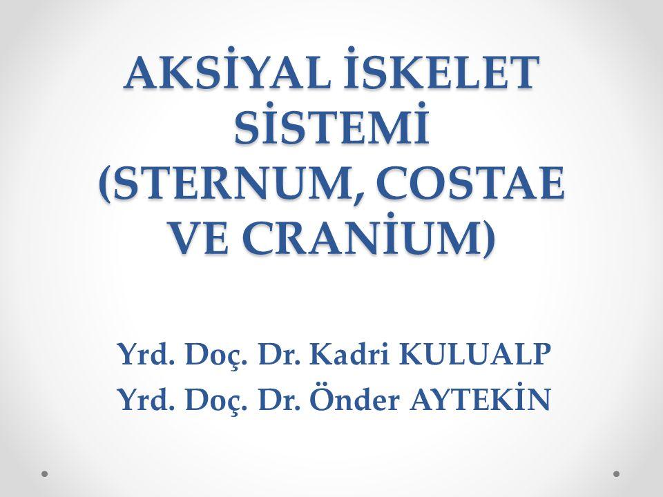 AKSİYAL İSKELET SİSTEMİ (STERNUM, COSTAE VE CRANİUM) Yrd. Doç. Dr. Kadri KULUALP Yrd. Doç. Dr. Önder AYTEKİN