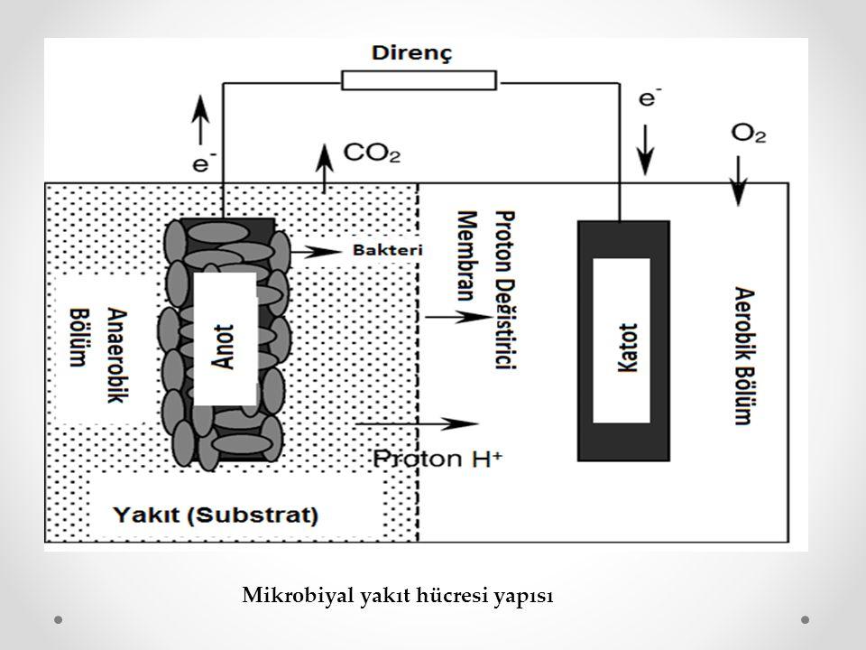 ÖRNEK ÇALIŞMA Mikrobiyal yakıt hücresinde Shewanella putrefaciens tarafından organik atıklardan elektrik üretimi  Bu çalışmada, iki hazneli MYH ve saf kültür Shewanella putrefaciens kullanılmıştır.
