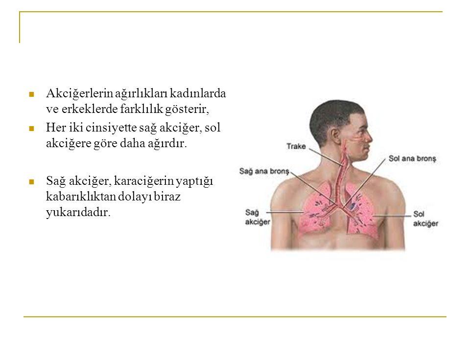 Akciğerlerin ağırlıkları kadınlarda ve erkeklerde farklılık gösterir, Her iki cinsiyette sağ akciğer, sol akciğere göre daha ağırdır.