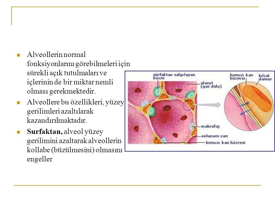 Alveollerin normal fonksiyonlarını görebilmeleri için sürekli açık tutulmaları ve içlerinin de bir miktar nemli olması gerekmektedir. Alveollere bu öz