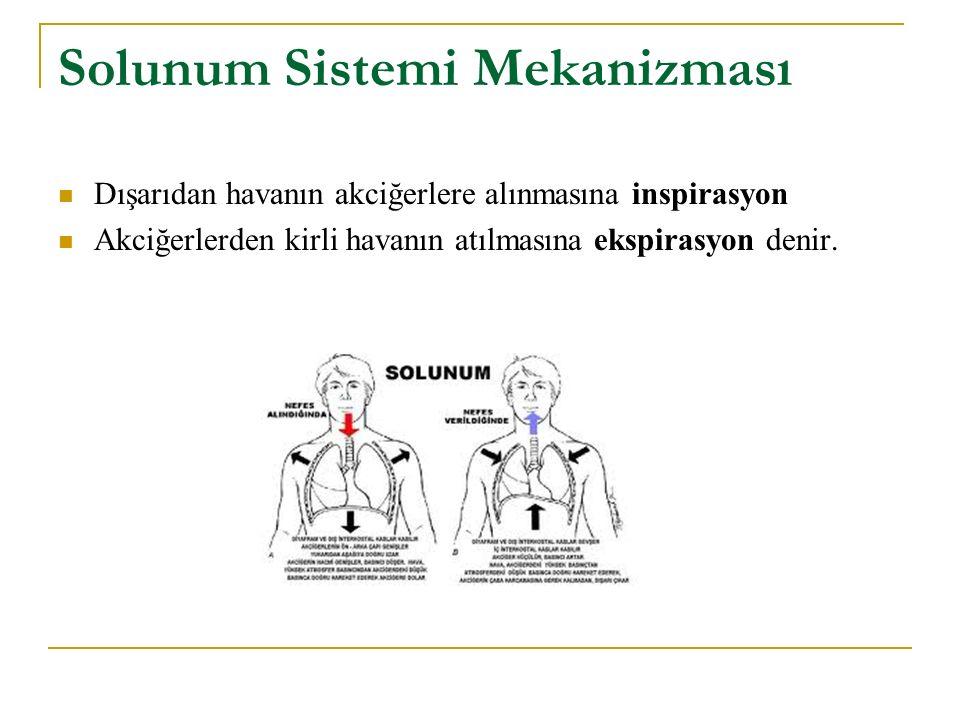 Solunum Sistemi Mekanizması Dışarıdan havanın akciğerlere alınmasına inspirasyon Akciğerlerden kirli havanın atılmasına ekspirasyon denir.