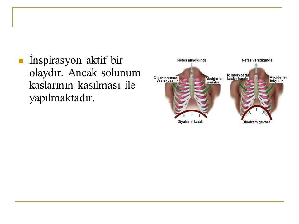 İnspirasyon aktif bir olaydır. Ancak solunum kaslarının kasılması ile yapılmaktadır.