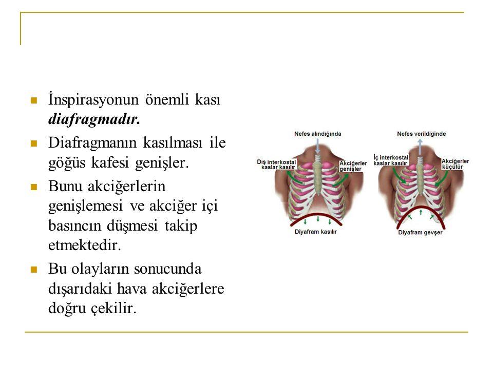 İnspirasyonun önemli kası diafragmadır. Diafragmanın kasılması ile göğüs kafesi genişler. Bunu akciğerlerin genişlemesi ve akciğer içi basıncın düşmes