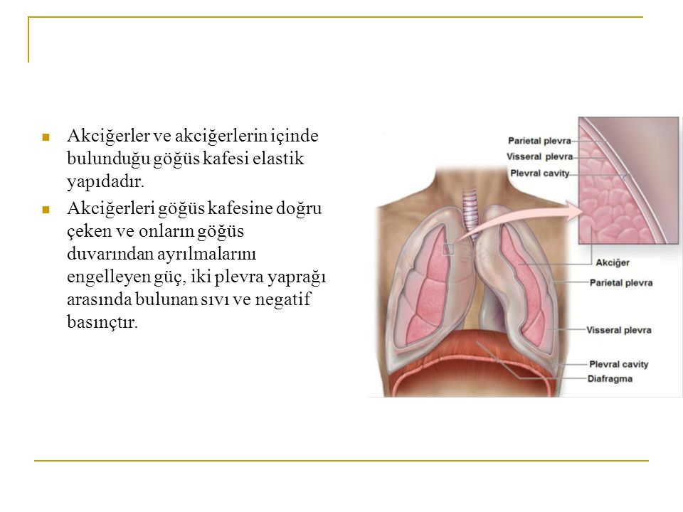 Akciğerler ve akciğerlerin içinde bulunduğu göğüs kafesi elastik yapıdadır. Akciğerleri göğüs kafesine doğru çeken ve onların göğüs duvarından ayrılma