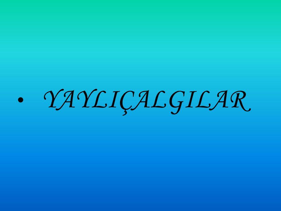 KAVAL KAVAL:Üflemeli bir Türk Halk çalgısıdır Halk arasında çoban çalgısı olarak bilinir Değişik yörelerde Guval, Kuval adlarıyla da bilinmektedir Çobanın kaval ile koyun sürüsünü yönlendirdiği inanışının halk arasında yaygın olduğu bilinmektedir Kaval kelimesinin içi boş anlamına gelen Kav kökünden türediği sanılmaktadır.