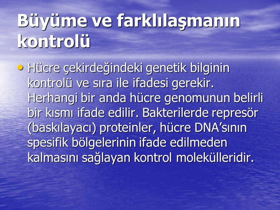 Büyüme ve farklılaşmanın kontrolü Hücre çekirdeğindeki genetik bilginin kontrolü ve sıra ile ifadesi gerekir. Herhangi bir anda hücre genomunun belirl