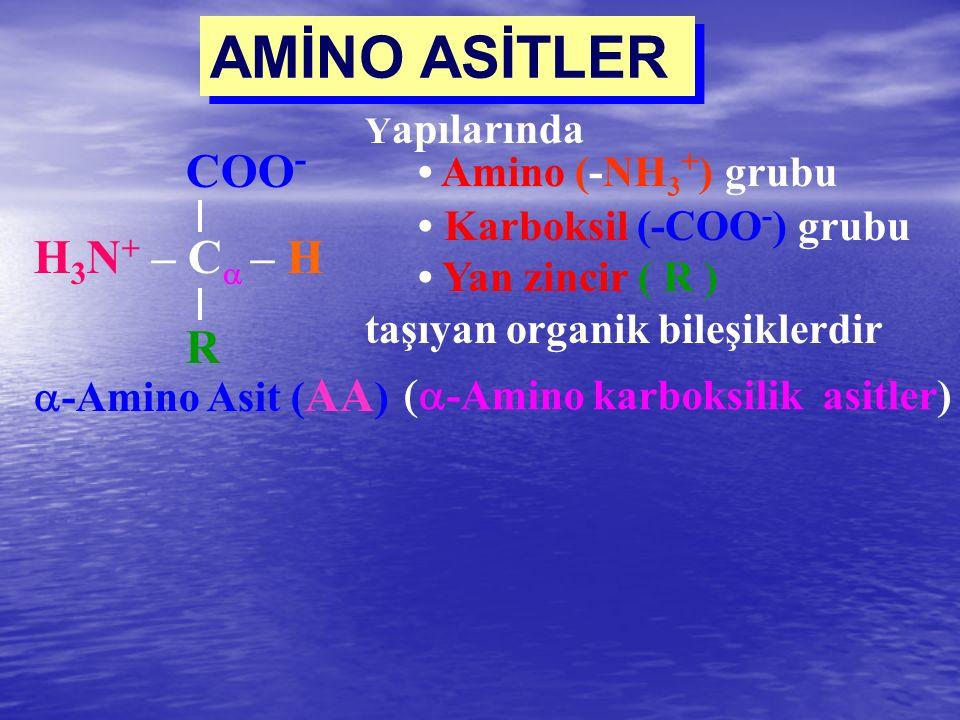 AMİNO ASİTLER  -Amino karboksilik asitler) COO - H 3 N + – C  – H R  -Amino Asit ( AA ) Y apılarında Amino (-NH 3 + ) grubu Karboksil (-COO - ) gr