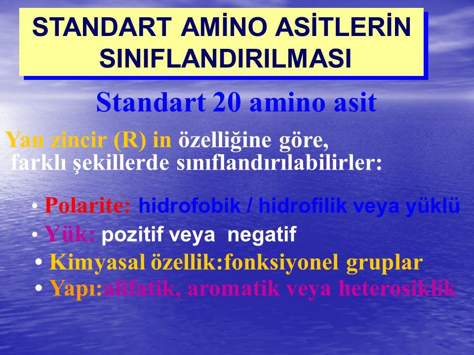 STANDART AMİNO ASİTLERİN SINIFLANDIRILMASI STANDART AMİNO ASİTLERİN SINIFLANDIRILMASI Standart 20 amino asit Yan zincir (R) in özelliğine göre, farklı