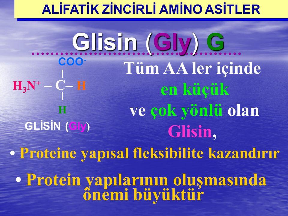 Glisin (Gly) G Protein yapılarının oluşmasında önemi büyüktür H 3 N + – C– H COO - H GLİSİN (Gly ) Tüm AA ler içinde en küçük ve çok yönlü olan Glisin
