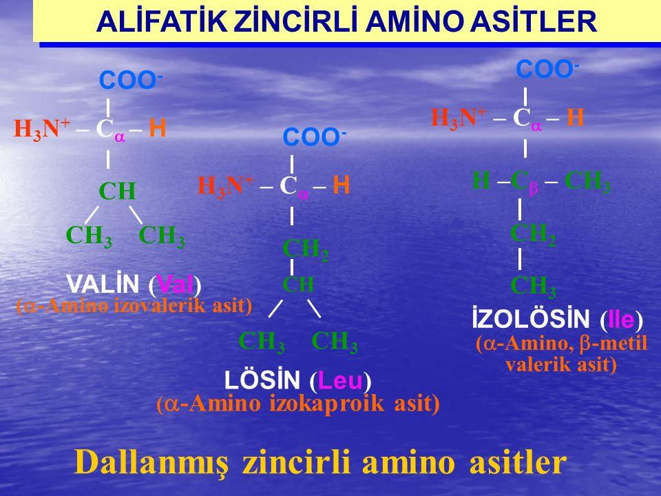 CH 3 H 3 N + – C  – H COO - CH VALİN ( Val ) (  -Amino izovalerik asit) H 3 N + – C  – H COO - H –C  – CH 3 CH 2 CH 3 İZOLÖSİN ( Ile ) (  -Amino,