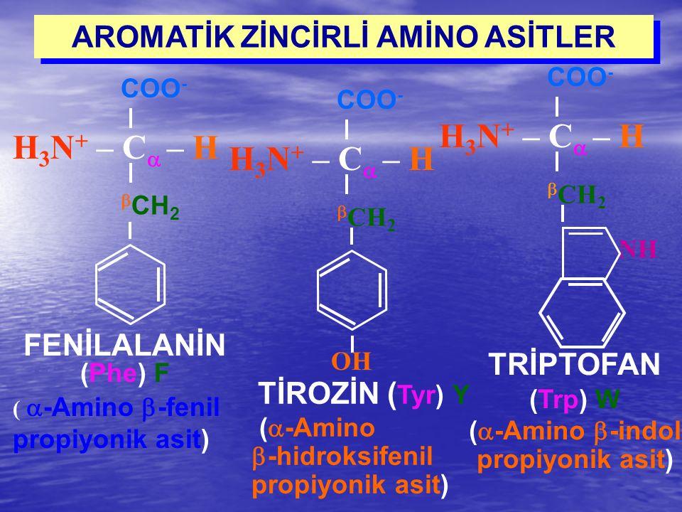 COO - H 3 N + – C  – H  CH 2 FENİLALANİN (Phe) F (  -Amino  -fenil propiyonik asit) TİROZİN ( Tyr) Y (  -Amino  -hidroksifenil propiyonik asit)