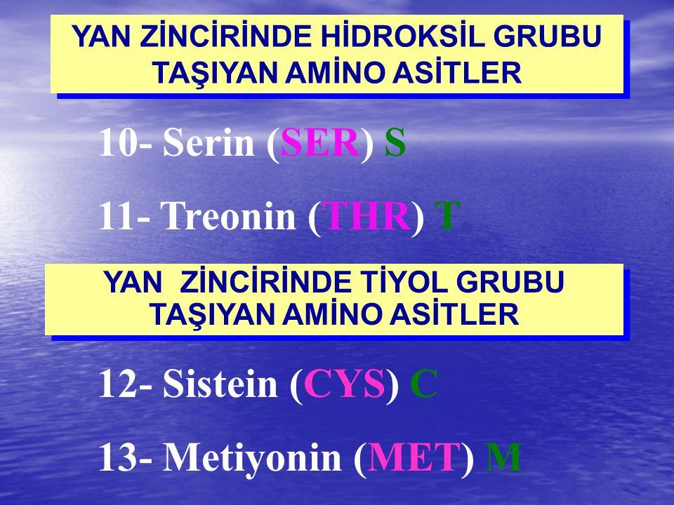 YAN ZİNCİRİNDE HİDROKSİL GRUBU TAŞIYAN AMİNO ASİTLER 10- Serin (SER) S 11- Treonin (THR) T 12- Sistein (CYS) C 13- Metiyonin (MET) M YAN ZİNCİRİNDE Tİ