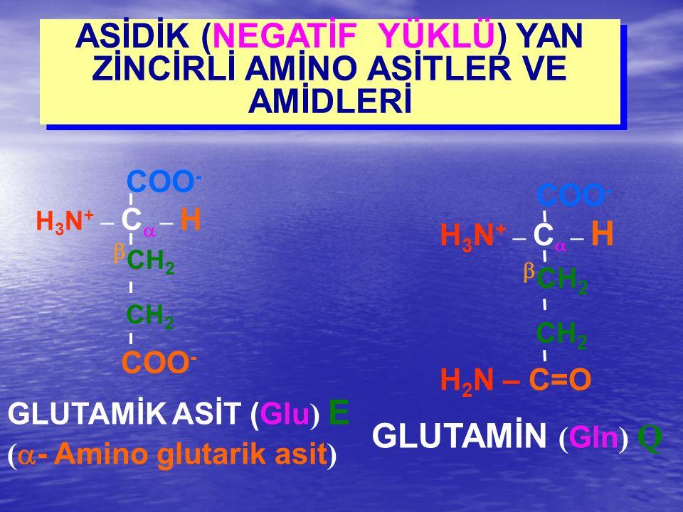 ASİDİK (NEGATİF YÜKLÜ) YAN ZİNCİRLİ AMİNO ASİTLER VE AMİDLERİ GLUTAMİN ( Gln ) Q H 3 N + – C  – H COO -  CH 2 CH 2 H 2 N – C=O GLUTAMİK ASİT (Glu )