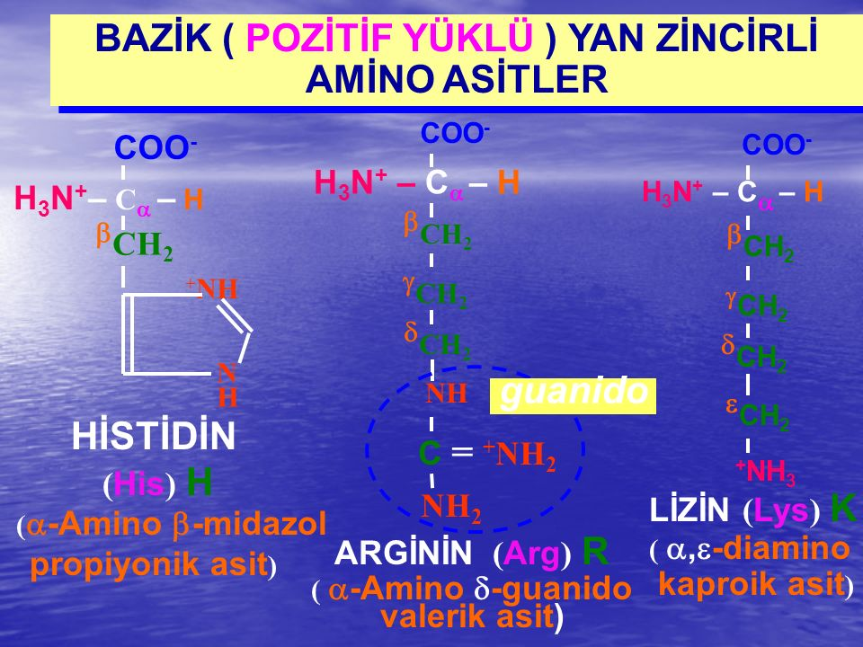 BAZİK ( POZİTİF YÜKLÜ ) YAN ZİNCİRLİ AMİNO ASİTLER  CH 2  CH 2  CH 2 NH C = + NH 2 NH 2 H 3 N + – C  – H COO - ARGİNİN ( Arg ) R (  -Amino  -gua