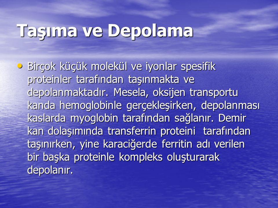  -Aminoizobutirik Asit Tiroksin(T 4 )Tetraiyodotiro nin Sarkozin Sarkozin Homoserin Homoserin Sitrüllin Sitrüllin Ornitin Ornitin Taurin Taurin Dihidroksifenilalanin(DOPA ) (Glu  GABA) (Glu  GABA)  -Amino bütirik asit(GABA) Pantotenik asitin bileşeni Bazı dipeptid yapıları ß-Alanin ß-Alanin Biyolojik fonksiyon Amino Asit Nörotransmitter Üre sentezinde ara ürün AA metabolizmasında ara ürün Tiroid hormonu Pirimidin yıkım ürünü(idrar) Protein yapısına girmeyen AAler