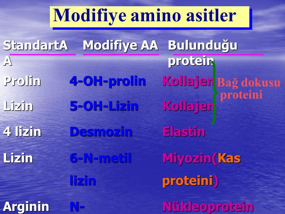 Modifiye amino asitler StandartA A Modifiye AA Modifiye AA Bulunduğu protein Prolin4-OH-prolinKollajen Lizin5-OH-LizinKollajen 4 lizin DesmozinElastin