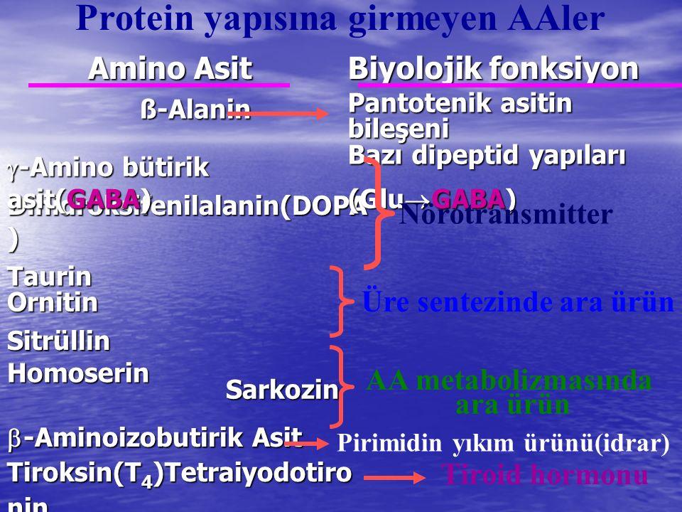  -Aminoizobutirik Asit Tiroksin(T 4 )Tetraiyodotiro nin Sarkozin Sarkozin Homoserin Homoserin Sitrüllin Sitrüllin Ornitin Ornitin Taurin Taurin Dihid