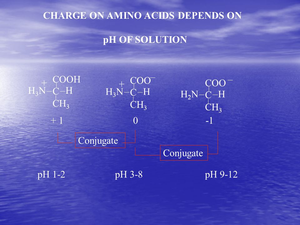 CHARGE ON AMINO ACIDS DEPENDS ON pH OF SOLUTION COOH C CH 3 H3NH3NH + COO C CH 3 H3NH3NH + COO C CH 3 H2NH2NH + 10 Conjugate pH 1-2pH 3-8pH 9-12