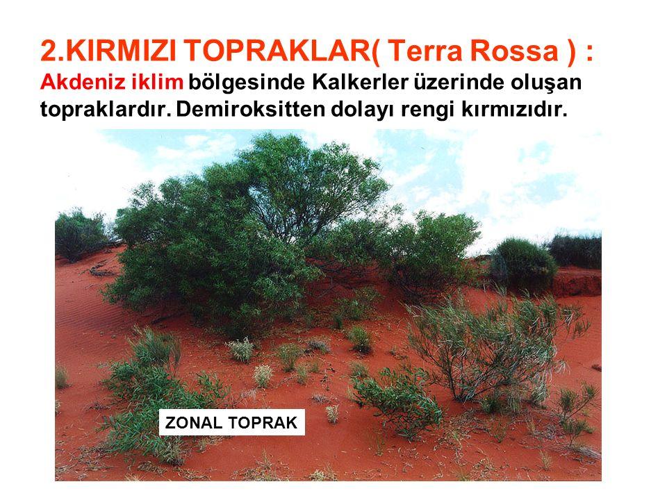 2.KIRMIZI TOPRAKLAR( Terra Rossa ) : Akdeniz iklim bölgesinde Kalkerler üzerinde oluşan topraklardır. Demiroksitten dolayı rengi kırmızıdır. ZONAL TOP