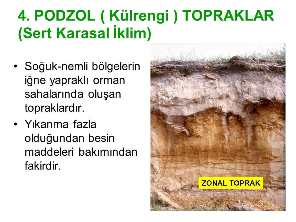 4. PODZOL ( Külrengi ) TOPRAKLAR (Sert Karasal İklim) Soğuk-nemli bölgelerin iğne yapraklı orman sahalarında oluşan topraklardır. Yıkanma fazla olduğu