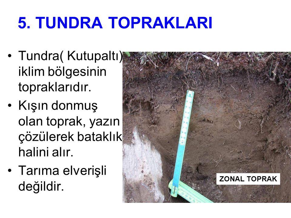 5. TUNDRA TOPRAKLARI Tundra( Kutupaltı) iklim bölgesinin topraklarıdır. Kışın donmuş olan toprak, yazın çözülerek bataklık halini alır. Tarıma elveriş