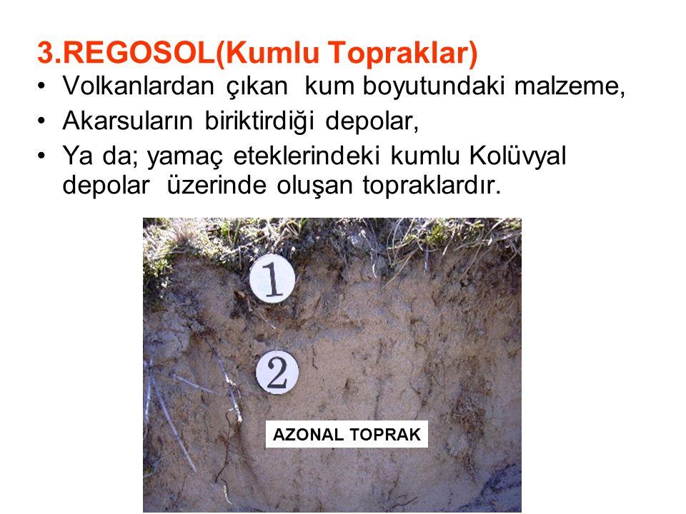 3.REGOSOL(Kumlu Topraklar) Volkanlardan çıkan kum boyutundaki malzeme, Akarsuların biriktirdiği depolar, Ya da; yamaç eteklerindeki kumlu Kolüvyal dep
