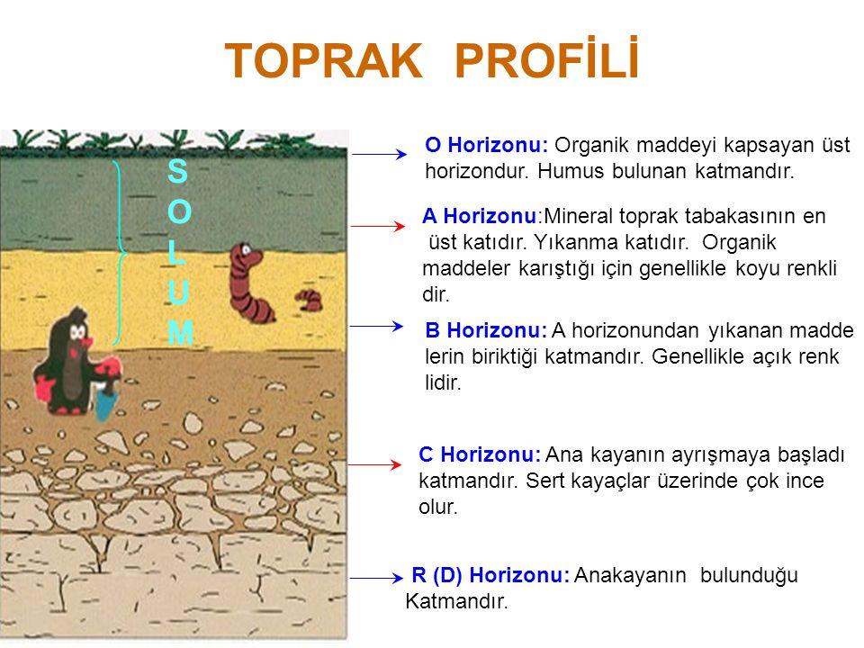 B) Hidromorfik(Bataklık) Topraklar B) Hidromorfik Topraklar: Bataklık alanlarda ya da taban suyu seviyesinin yüksek olduğu sahalarda oluşurlar.