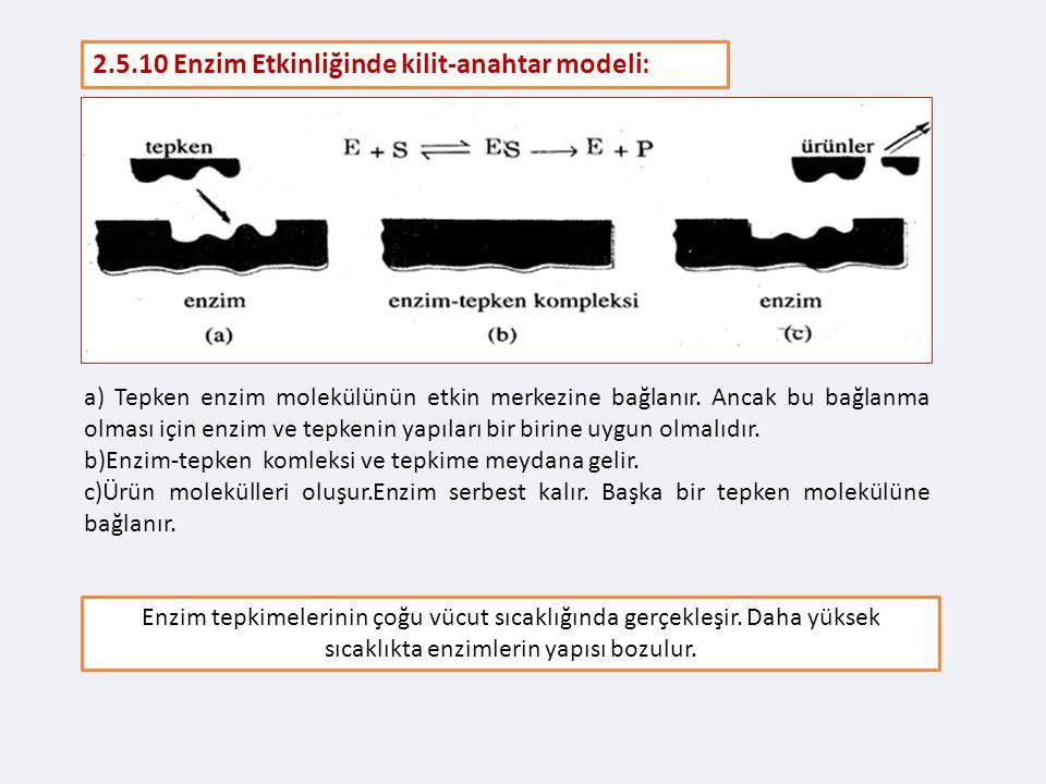 2.5.10 Enzim Etkinliğinde kilit-anahtar modeli: a) Tepken enzim molekülünün etkin merkezine bağlanır.