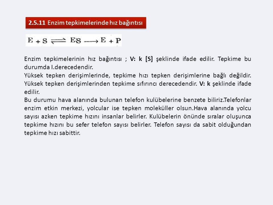 2.5.11 Enzim tepkimelerinde hız bağıntısı Enzim tepkimelerinin hız bağıntısı ; V: k [S] şeklinde ifade edilir.